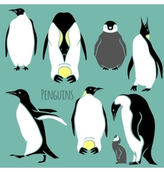 black and white penguin set vector image