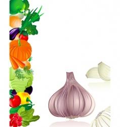garlic vector image