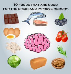 10 foods that are good for the brain and improve vector