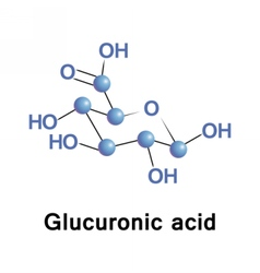 Glucuronic acid is a uronic acid vector