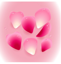 pink rose petals with drops of water vector image