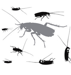 insects collection vector image