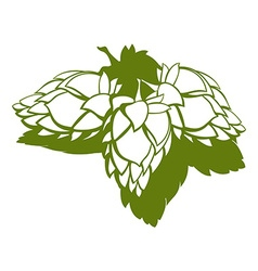 Hop flower beer ingredient vector
