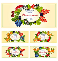 Berry and fruit banner set for food label design vector