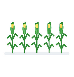 Flat style of corn vector