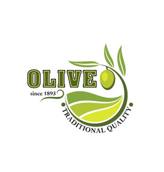 Olives branch icon for olive oil product vector