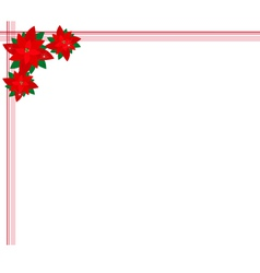 Poinsettia flowers forming a christmas background vector
