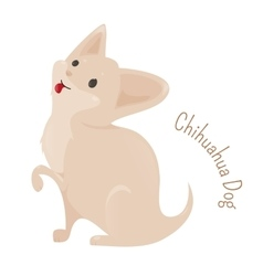 Chihuahua isolated on white background vector image