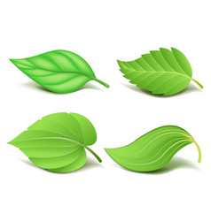 collection of realistic green leaves set vector image