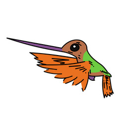 hummingbird cartoon hand drawn image vector image