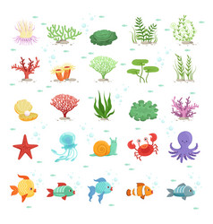 Marine animals fishes collection and underwater vector