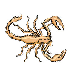 sketch of scorpion vector image
