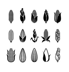 Fresh corn harvest icons set vector