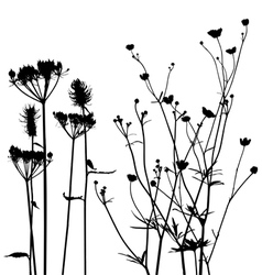 Meadow weeds silhouettes vector