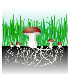 Mushrooms vector
