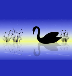Swan on the river at sunrise scenery vector