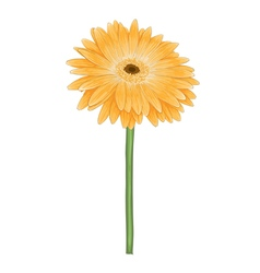 Yellow gerbera with watercolor effect isolated vector