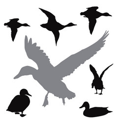 ducks collection vector image