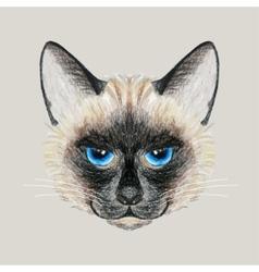Hand drawn siamese cat vector