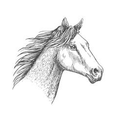 Horse head pencil sketch strokes portrait vector