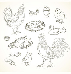 freehand drawing chicken items vector image vector image