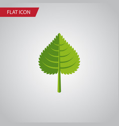 isolated foliage flat icon hickory element vector image vector image