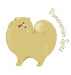 Pomeranian spitz isolated on white background vector image