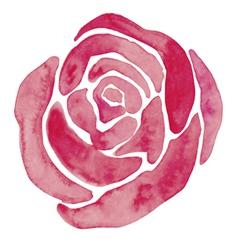 Watercolor rose vector