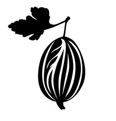 gooseberry and leaf image vector image