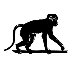 Monkey black silhouette on white background vector