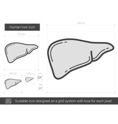 Human liver line icon vector