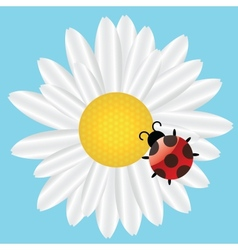 Ladybird on daisy on blue background vector