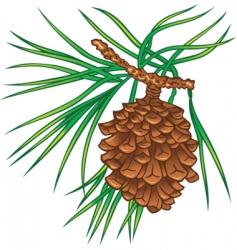 Pine tree cone vector