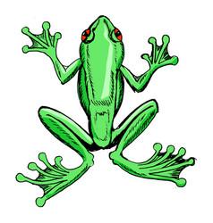 Sketch of tree frog vector