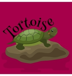 Tortoise pet for home reptile animal vector
