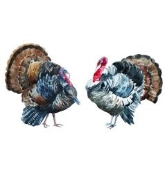 Watercolor turkey vector