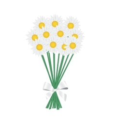 A posy of daisies tied with a white ribbon vector