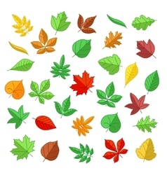 Autumn and summer leaves in flat style vector