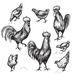 Cock sketch vector