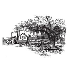 a sugarcane mill vintage vector image