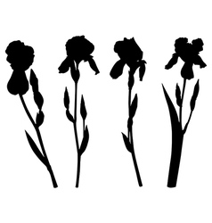 iris set vector image vector image