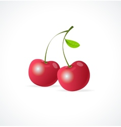 Ripe red cherry berries vector image