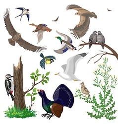 Birds set vector