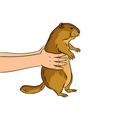 Groundhog in hands pop art vector