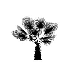 sketch palm tree hand drawn silhouette palm tree vector image vector image