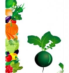 vegetables radish vector image