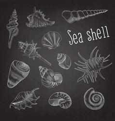 Seashells hand drawn aquatic doodle on blackboard vector