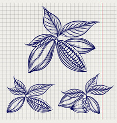 sketch of cocoa beans set vector image