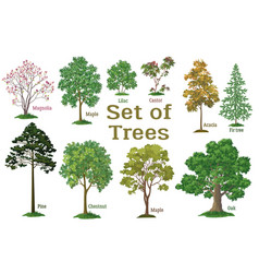 set plants trees and bushes vector image