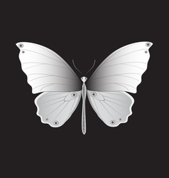 Iron butterfly vector